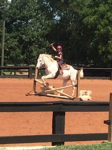 english horse jumping
